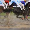 激しい雨が川崎競馬を洗う