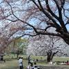 晴れた春の日に公園でお昼ご飯を食べるという楽しみ方