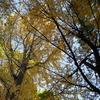 公園の葉っぱ