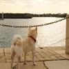 【'18.6.16_1515更新】Twitter説話「研究室の犬」by 仲見満月