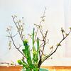 花器の中は春です