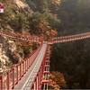 ★絶景!韓国に「Y字型つり橋」オープン。