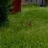 野ウサギと紅茶