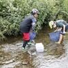 【川づくり・清瀬の会】空堀川で生物調査・観察会開催