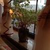 AURA HOTEL アパートのそばの小さなホテル ジェロナグラにはこんな感じのホテルがたくさんあります
