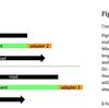古いサンプルのデータ (fastqやbam) から効率的にアダプターを除く leeHom