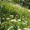 ブダペスト&スロヴェニア周遊18 - Ojstricaプチ登山とブレッド湖散策 可愛いお花畑の連続!