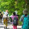 6/14(土)、風の旅行社観察会「ときめき昆虫学」追加日程を実施します