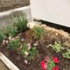 家庭菜園、野菜の苗を植えました!