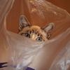 【動物】アルバム:なぎ【猫】