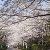「コロナより桜」と言った人達と、こんな人達・・
