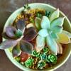 🌵多肉植物   鉢減らしの植え替え作業・霜の朝  他🌵