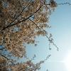 大邱(テグ):もう春だ!