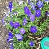 石川県穴水町「いしかわ花と緑の里」