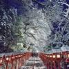貴船神社で雪のライトアップを撮影。