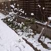 初雪の一日。
