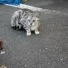 猫とサイトハウンド。