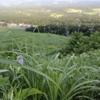 6/18・友人と鳥取てふあそび 〜 西の大山・東の鳥取砂丘で旬の蝶を追いかけました