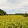駒ケ岳とひまわり…
