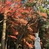 定光寺(愛知県瀬戸市)の紅葉🍁🍁が更なる見ごろを迎えています。🍁🍁🍁