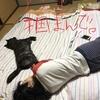 甲斐犬サンの「今日から俺は‼︎」の巻〜頑張ンバ‼︎(★-皿-★)9
