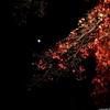 【混雑】京都の有名紅葉スポットの昨年の混雑状況&一見の価値ありスポット