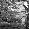 京都の庭園2