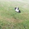 犬が転がって体をゴロゴロこすりつける理由