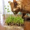 『豆苗の芽が伸びた』 主婦ブログ ハッピーライフ