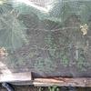 防虫ネットを張っても雑草は生える 当たり前か