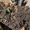 腐葉土の中には何匹ミミズがいるかな?