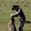 2012 警察犬日本訓練チャンピオン決定競技会 霧ヶ峰 選別決勝 閉会式