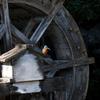 水車とカワセミ