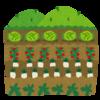 家庭菜園セカンドシーズン
