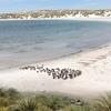 フォークランド諸島のペンギンと「何もない」がある場所