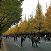 フォト散歩 - 神宮外苑の銀杏祭り