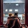 窓から雨の降る屋外をみつめるネコたちが可愛い ネコ好きならこのインスタアカウントをフォローしよう