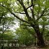 日本有数の多雨地帯『大台ケ原 東大台コース』の森を歩く