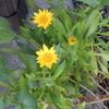 春の花、三景