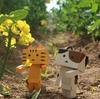 滝川市 丸加高原伝習館のお祭り用の菜の花畑