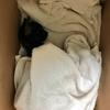 沖縄で子猫を拾った〜ゲストハウスヘルパーBlog 24日目〜