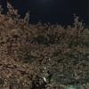 桜の夜に。『恐れを愛に 涙を笑いに 喪失を豊かさに』