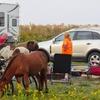 【アメリカ生活】野生馬が訪ねてくるキャンプサイト☆Assateague state park(1泊予約編)