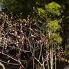 【GW】函館公園で花見【赤ちゃん連れでも楽しい】