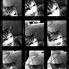 自撮り用?アプリで猫を撮る