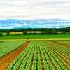 シェア農園 週報(6/2)からのリサイクルショップ(副業の一歩)