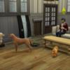 シムズ4 Cats&Dogs編 第12話 新たな生命