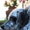 犬も憂鬱になるの?!『土日病』