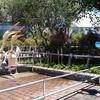 八景島シーパラダイスのペリカン餌やり体験