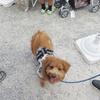 【レポ】犬のための盆祭りイベント、盆ドッグ2017に行ってきました。